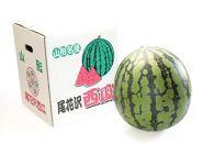 AP84【定期便】【山形県産】人気フルーツ 令和食べ切りコース【年7回】