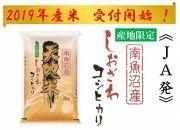 【19年産新米予約JA発頒布会】しおざわコシヒカリ(5kg×12回)