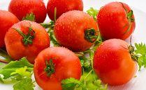 フルーツトマト朱々(Мサイズ) 1kg 16~18玉