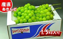 【数量限定】産直あきんどオススメ逸品!シャインマスカット1.5kg