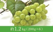 年明け津軽産徳用シャインマスカット約1.2kg(200g×6)