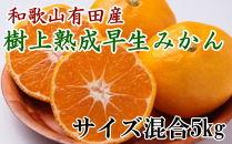 紀州有田産早生みかんの樹上熟成みかん5kg(サイズ混合)【2021年1月以降発送】