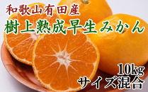■紀州有田産早生みかんの樹上熟成みかん10kg【数量限定】[2021年1月~発送]
