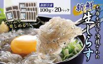 志布志湾のめぐみ 冷凍生しらす 20パック