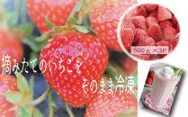 【農家直送!用途色々】冷凍完熟いちご500g×3P