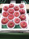 青森県産【贈答用大玉】ふじ約5kg CA貯蔵りんご
