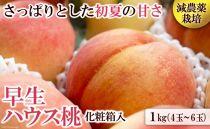 南島原の特別栽培ハウス桃「約1kg」化粧箱 ※2020年5月中旬頃~6月中旬頃発送(予定)
