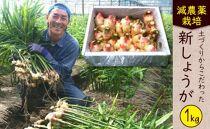 減農薬栽培「新生姜」<約1kg>★2020年10月中旬~2020年11月中旬の発送予定