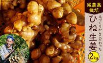 減農薬栽培「囲い生姜」<約2kg>