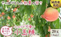 南島原の特別栽培小玉ハウス桃(Mサイズ:10パック) ※2020年5月中旬頃~6月中旬頃発送(予定)