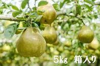 福島産果物の女王ラ・フランス5kg「箱入」