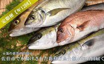 【魚介類定期便】☆海の直売所自慢☆佐伯市で水揚げされた新鮮な魚介類が年12回届く