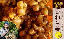 減農薬栽培「囲い生姜」<約1kg>