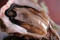 プロの魚屋さんが目利きした!高級岩牡蠣(殻付)2~3個(500g)