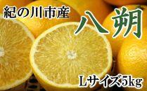 【厳選】和歌山紀の川の八朔約5kg(Lサイズ・秀品)