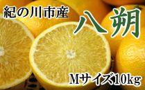 【厳選】和歌山紀の川の八朔約10kg(Mサイズ・秀品)