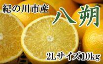 【厳選】和歌山紀の川の八朔約10kg(2Lサイズ・秀品)