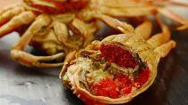 内子外子が美味!茹でセイコガニ(セコ蟹、香箱ガニ、コッペ)大サイズ10匹セット