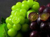 贅沢!もぎたて葡萄のセット(約1.5kg)