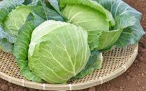 【期間限定】キャベツLサイズ4玉セット(約5kg)雪国津南の新鮮野菜