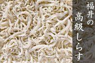 福井県産 高級しらすと名高い「吉崎しらすのしらす干し」(2kg)