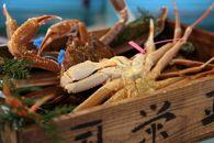 北畿水産特製鍋だし付き日本海産タグ付き活松葉かに(900g~1kg)