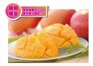 ★注文締め切り間近★宮古島産アップルマンゴー1kg