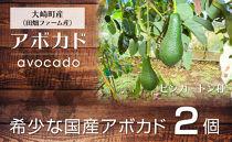 【先行予約】滑らかな食感と濃厚な旨み!アボカド(ピンカートン種)2玉
