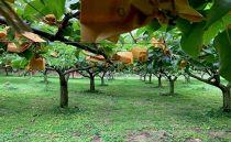ジューシーで柔らさが特徴の甘さも大満足!豊水梨4個入×2ケース