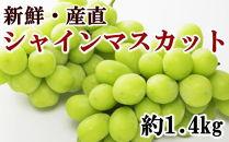 【先行予約】【新鮮・産直】有田巨峰村の朝採りシャインマスカット1.4kg