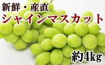 【先行予約】【新鮮・産直】有田巨峰村の朝採りシャインマスカット4kg
