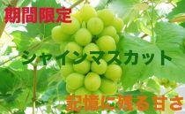 香川県産シャインマスカット2.0キロ