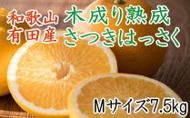 こだわりの和歌山有田産木成り完熟八朔「さつき」 Mサイズ(中玉)7.5Kg入り