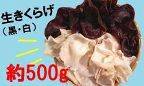 《冷凍》純国内産生きくらげ 黒・白(合計約500g)◆配送時期:2020/6/30~
