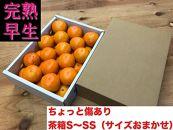 ちょっと傷あり【完熟早生・有田みかん】S~SSサイズ約2kg(サイズおかませ)