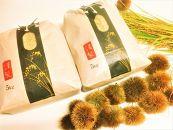 ◆【新米予約・令和1年(2019)産】農家直送近江米コシヒカリ5kg×2袋精米済