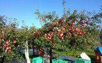 「リンゴのふくさわ」旬のリンゴ14~18玉詰め合わせ