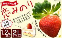 【大粒限定】【1.2kg以上】いちご「恋みのり」期待の新品種2Lサイズ以上