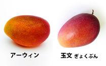 あったか温果mangoマンゴー/2種20kg詰め合わせセット