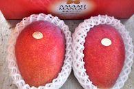 【2020年先行予約分】お日様の恵み。奄美のあま~い絶品マンゴー(1.2kg/秀品)