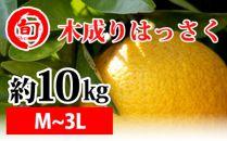 木成りはっさく 約10kg(M~3L)〔サイズおまかせ〕 旬の味覚市場