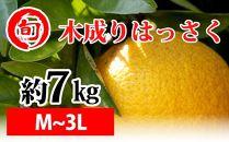 木成りはっさく 約7kg(M~3L)〔サイズおまかせ〕 旬の味覚市場