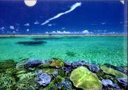 宮古島クリアファイルA4(5枚セット・珊瑚礁)