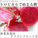 無農薬 ドラゴンフルーツ(赤)5kg