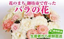 バラの花(約20本)花のまち御坊産の薔薇 新鮮直送!