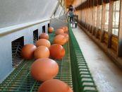 ☆放し飼い自然卵「歩荷」80個入箱