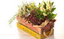 季節のお花が楽しめる寄せ植え