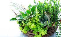 手軽に楽しめる多肉植物の寄せ植え