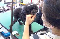 【ポイント交換専用】ワンちゃんトリミングチケット(超小型犬)