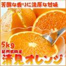 とにかくジューシー清見オレンジ 5kg